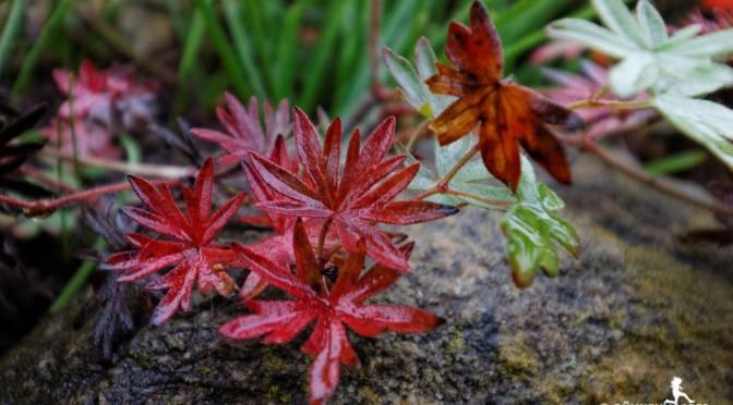 Herbstlicher Regentag