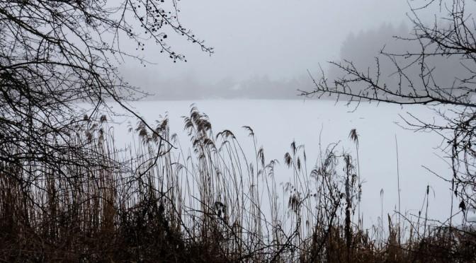 Nebel im Januar